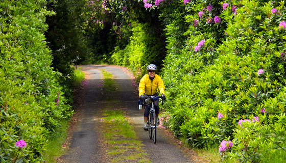 Ireland Biking Tour